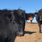 MMB EP. 214 chat with Patrick From KC Cattle