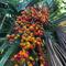Ep. 190 - A Love Affair With Palms