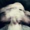 MINDRAPE! - Old School Breakcore/Gabber Mix