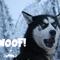 anton d - woof!