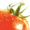 Serj Jiro - Senior Pomidor Mix