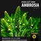 AMBROSIA podcast #004