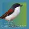 Chromacast 51.1 - Jeff Devoe - Chromacast x The Weekend Dance Party Takeover (June 2019)