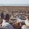 Balades Sonores - Summer mix