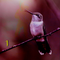 Roter Kolibri #1