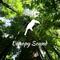 Canopy Sound 007
