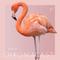 Chromacast 47 - Misjn