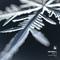 Snowfall Vol.3