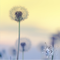 Spring Softly - Midtempo Chillout House