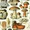 LSS 59: Fun with the Fungi.