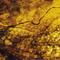 Sleeping Dogs Lie 486 (08jun18): Eric Cordier, Steve Roach, Saffron Wood, Hybryds