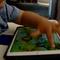 Historias Humanas: ¿Podemos aprovechar la adicción a los dispositivos móviles para el aprendizaje?