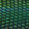 Twin Peetz : Microscopic 037 (June 2017)