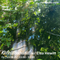 Kaleidosound w/ Elsa Hewitt 13/08/21 (Netil Radio)