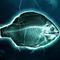 Wunder Parlement - Les députés demandent l'interdiction de la pêche électrique - janv. 2018