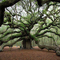Angel Oak Tree Mixtape