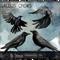 BDFM Interviews Gordon Andrew of the Gallus Crows