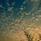 plicploc - gazoullis et friselis (2016) (radio Musiq'3)
