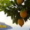 The Fruit of Freedom - Freedom to Live Generously (Audio)