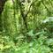 RSD 17 Jungle