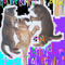 HumBum on Animal Collective Radio (youmix)