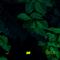 data detox – las crónicas del perro negro #06