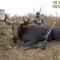 Take Aim Outdoors - Episode 186 Epic Moose Hunt