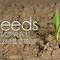 Seeds - Part 4