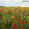 flowering 01