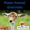Power Animal Exercises