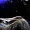 My little Cat 1:3 Acid Ray (acid time)