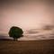 Autumn Please Be Late (2014 Fall)