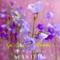 Sju sorters blommor