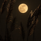 Moon Far Away