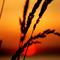 Sunset Vibe Pt. 2 (April 2014)