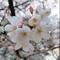 kicikk - Kwiecień 2018 Cherry Blossom Deep Mix