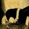 Βραδινές Περιπλανήσεις - AntiChristmas 15/12/2015