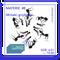 RADIO KAPITAŁ: Materie #8 Mrówki grzybiarki (2020-01-04)