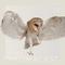 Chromacast 23 - Goingrey