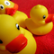 The Multiple Bathroom Ducks Mix