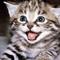 kittengurl