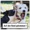 AdHg 106 - Angst vor Hunden