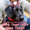 This Common Sense Policy Update Can Help Keep Dogs Safe  From Traps (513)