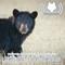 Cautiously Optimistic: Alberta Ready To Allow Rehab For Bears (514)