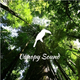 Canopy Sound 006