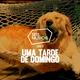 #28 - SEIS MÚSICAS PARA UMA TARDE DE DOMINGO logo