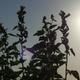 Ysmathegos -Ethnic rainbow of Gaia -