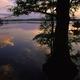 Woodland Nightfall Natural Sounds logo