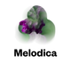 Melodica 16 January 2017 (DJ Calm X John Beltran)