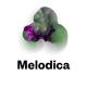 Melodica 16 January 2017 (DJ Calm X John Beltran)
